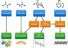 building blocks of lipids structure function exles of lipids
