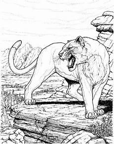 ausmalbilder tiere panther kostenlos zum ausdrucken