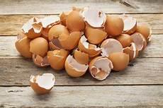 Eierschalen Als Dünger - eierschalen als d 252 nger verwenden