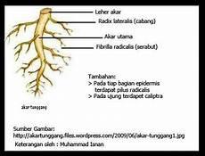 C Materi Ilmu Pengetahuan Alam Kelas 4