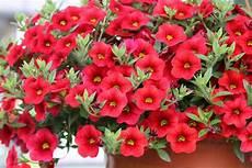 pflanzen f 252 r die pralle sonne geeignete balkon und