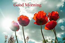 flower images hd morning morning flower images pics for wishes whatsapp dp