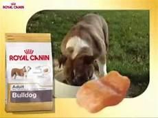 royal canin bulldog royal canin razas pienso para perros bulldog ingl 233 s
