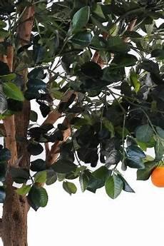 arbre fruitier intérieur arbre artificiel fruitier oranger int 233 rieur h 210 cm
