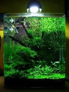 nano aquarium 30l the world s best photos of 30l and nano flickr hive mind
