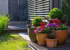 kuebelpflanzen fuer terrasse terrassenbepflanzung kosten tipps zur gestaltung