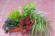 herbstblumen balkon winterhart bepflanzter balkonkasten 60 cm wintergr 252 n im