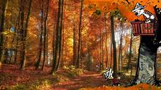 Realistic Fall Backgrounds