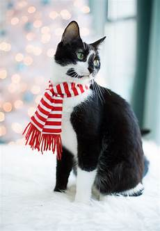 merry christmas love the cats love and olive