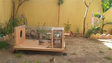 house sparrow trap plans homemade sparrow trap to catch all kind of birds part 1