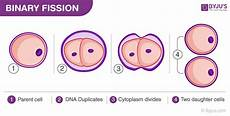 binary fission a mode of asexual reproduction