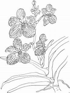 schoene orchidee ausmalbild malvorlage blumen