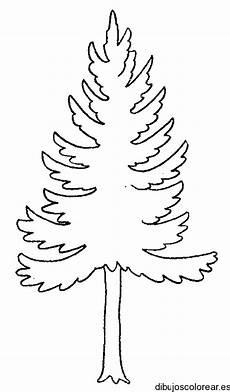 pino laso para colorear imagenes de pinos dibujados imagui