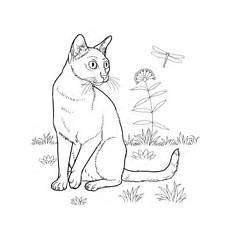 Ausmalbilder Siamkatze Ausmalbilder Katzen Malvorlagen Kostenlos Zum Ausdrucken
