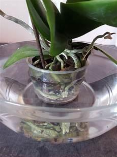 arrosage orchid 233 e comment et 224 quelle fr 233 quence