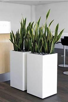 große pflanzen fürs wohnzimmer pin mignon m auf office plants in 2019 gartenprodukte pflanzen und indoor garten