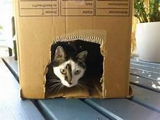 Karton Zum Spielen Ideen Um Katzenspielzeug Selber Zu Machen