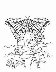 butterflies and flowers coloring pages getcoloringpages