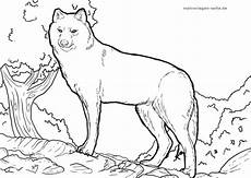 malvorlage wolf tiere kostenlose ausmalbilder