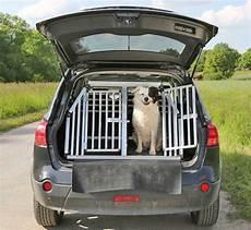 wie transportiert hunde sicher im auto tier tv
