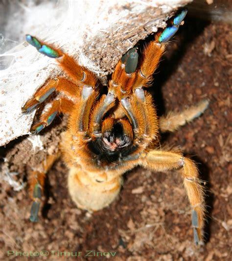 Obt Spider