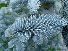 Malvorlagen Weihnachtsbaum Hamburg Weihnachtsbaum Bestellen Weihnachtsbaum Hamburg