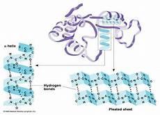 protein keep calm and study biochemistry