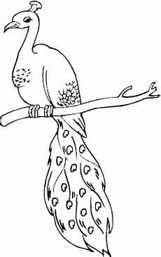 Gambar Fauna Burung Yang Mudah Digambar Gambar Burung