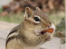 gabbia per scoiattolo giapponese cura degli scoiattoli come allestire una gabbia tutto ze