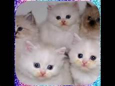 20 Gambar Anak Kucing Yg Lucu Imut Dan Menggemaskan