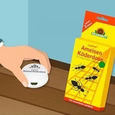 Ameisen Bekämpfen Wohnung - schimmel in der wohnung tipps zur vorbeugung und