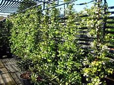 12 plantes grimpantes pour cloturer votre jardin