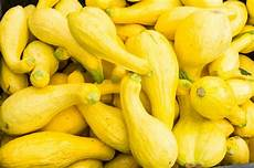 15 common types of squash and what to do with them myrecipes