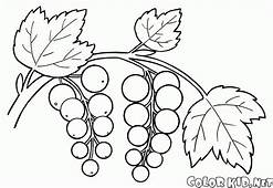 Coloring Page  Currant