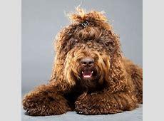 Dog Zone: Dog Breeds, Photos & Information
