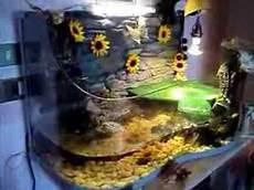 vasche x tartarughe d acqua acquario d acqua dolce per tartarughe 150 l appena