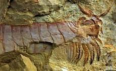 arthropod fossils show limbs of fuxhianhuiid 520