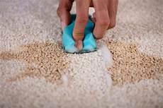So Entfernen Sie Alle Flecken Aus Ihrem Teppich Experto De