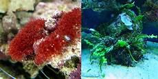 rote algen an der fassade einlaufphase