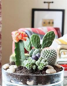 Comment Faire Un Jardin De Cactus Ou De Succulents Pour L