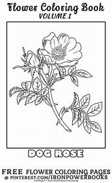 creative haven vintage flower seed packets coloring book 6 sle pages coloring pages