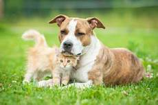 Hundehaltung In Der Mietwohnung Tierschutz Tierhaltung