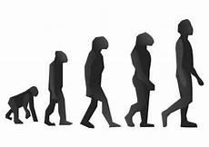 die evolution des menschen evolution