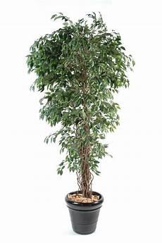 plante d intérieur haute arbre artificiel ficus lianes petites feuilles plante d