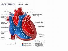Gambar Anatomi Fisiologi Kardiovaskuler