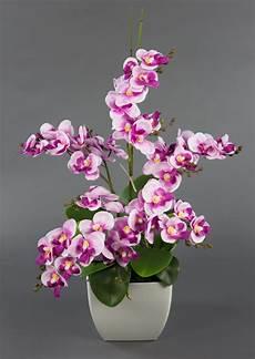 orchideen arrangement rosa pink im wei 223 en dekotopf ja