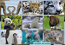 les animaux en voie de disparition quels sont les animaux en voie de disparition