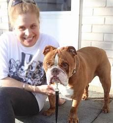 bulldog anglais a vendre quot t 233 moignages elevage bulldog pug boston rive sud de