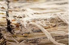 Common Myths About Asbestos Part 2 Crucial Environmental
