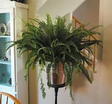 Pflanzen Wenig Licht - zimmerpflanzen f 252 r wenig licht 21 gr 252 ne und bl 252 hende arten